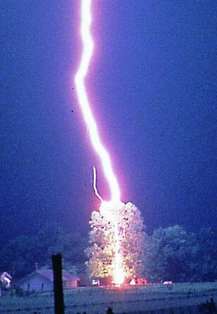 lightning_tree2.jpg